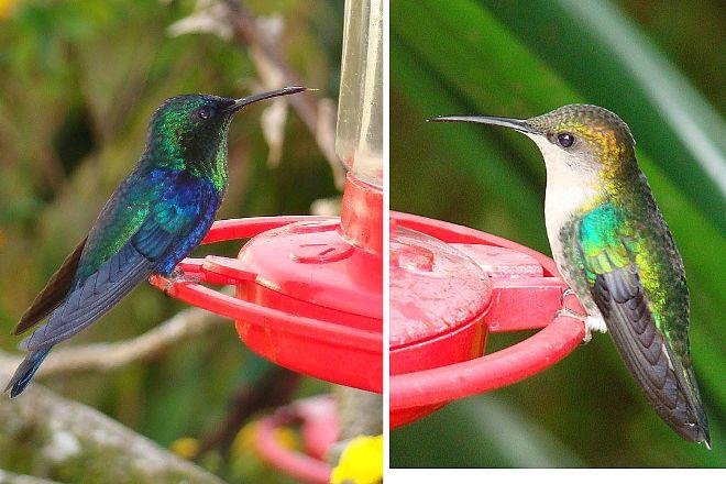 El Dorado Bird Reserve, Minca, Colombia