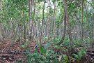 Gandoca - Manzanillo Wildlife Refuge