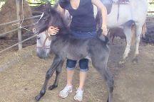 Alberto's Horses