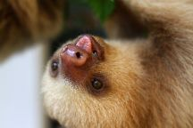 Alturas Wildlife Sanctuary, Dominical, Costa Rica