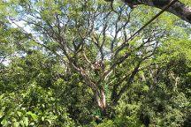 Cartagena Canopy Tour