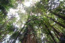 Cloudbridge Nature Reserve, San Gerardo De Rivas, Costa Rica