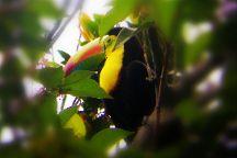 Costa Rica Eco Journeys