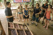 Rainforest Chocolate Tour