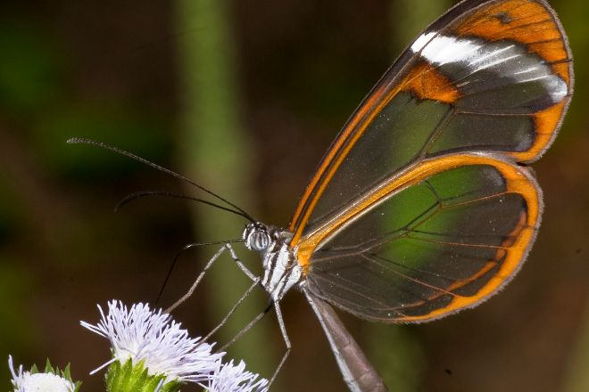 Butterfly Conservatory, El Castillo, Costa Rica