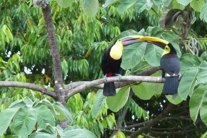 Diamante Verde Tours, Dominical, Costa Rica
