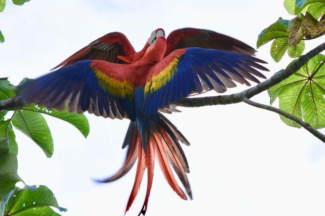 Kokopelli, Sierpe, Costa Rica