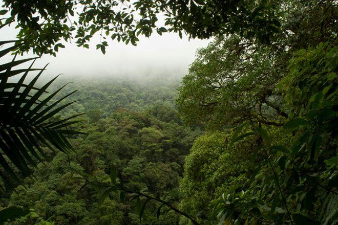 Locos por el Bosque, Coronado, Costa Rica