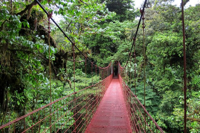 Monteverde Cloud Forest Biological Reserve, Monteverde Cloud Forest Reserve, Costa Rica