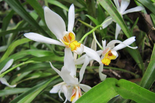 Monteverde Orchid Garden, Santa Elena, Costa Rica