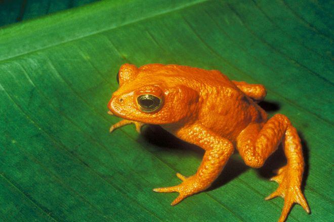 Ranario Monteverde Frog Pond, Santa Elena, Costa Rica
