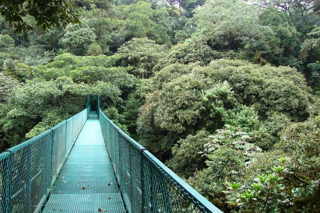 Santa Elena Skywalk, Santa Elena, Costa Rica