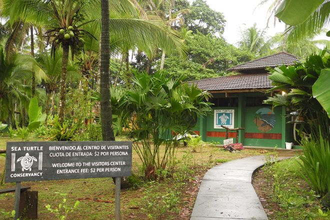 Sea Turtle Conservancy, Tortuguero, Costa Rica
