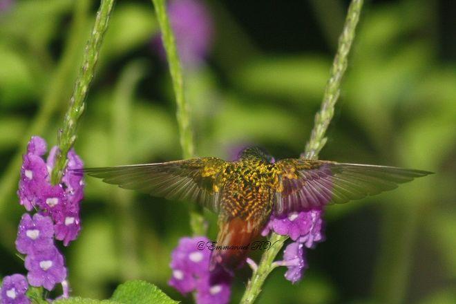 Tirimbina Biological Reserve, La Virgen, Costa Rica