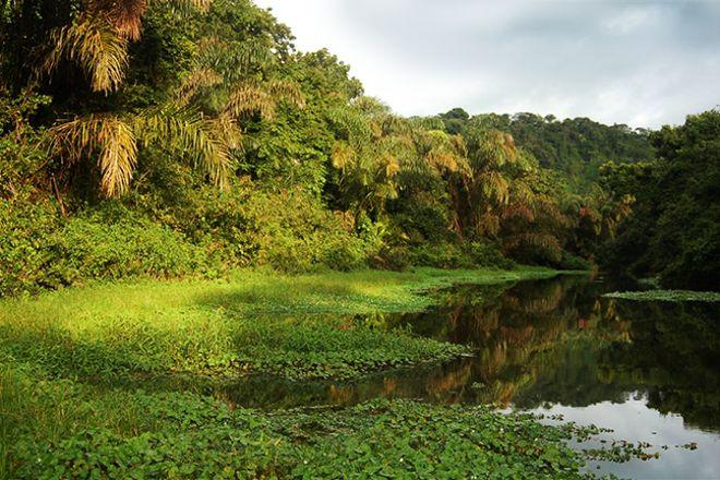 Tortuguero Tours - Adventures close to Nature, Tortuguero, Costa Rica