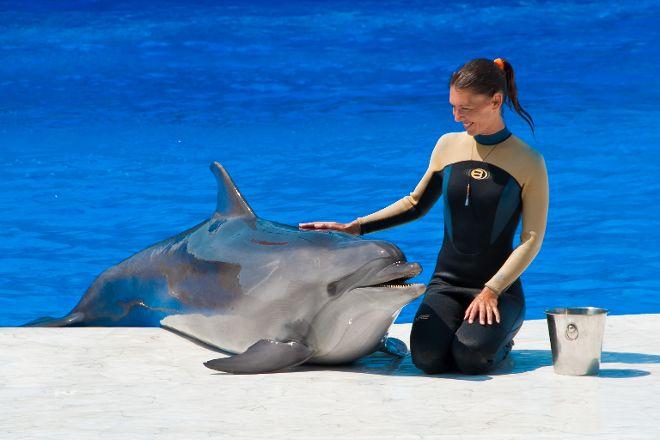 Sevastopol Dolphinarium in Artillery Bay, Sevastopol, Crimea