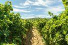 Rak Winery