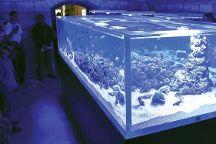 Aquarium Pula, Pula, Croatia