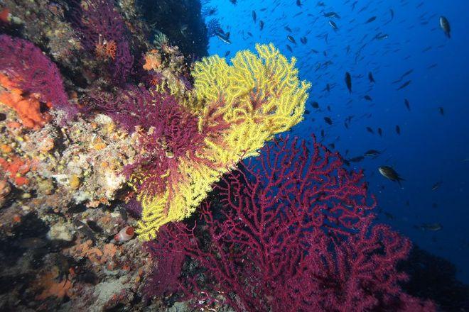 Najada Diving, Murter, Croatia