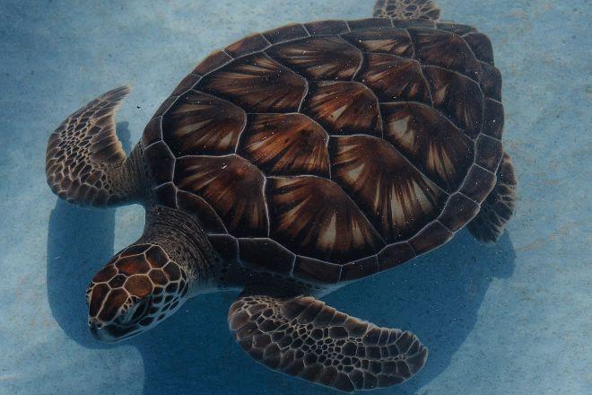 Sea Turtle Hatchery, Cayo Largo, Cuba