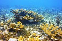 Dushi Diving