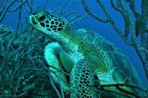 Rebel Diving Curacao