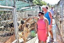 Kyrenia Animal Rescue, Kyrenia, Cyprus