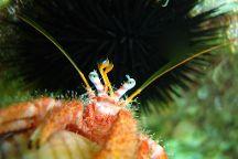 Nemo Dive Center