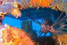 Q Divers Diving Centre & Retail Shop