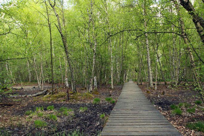 SOOS National Nature Reserve, Frantiskovy Lazne, Czech Republic