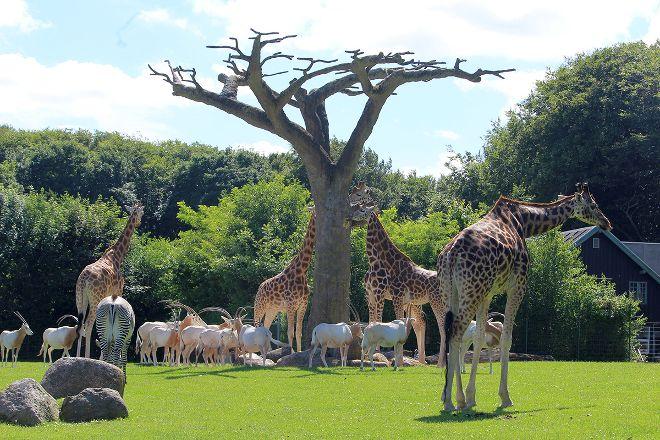 Aalborg Zoologiske Have, Aalborg, Denmark