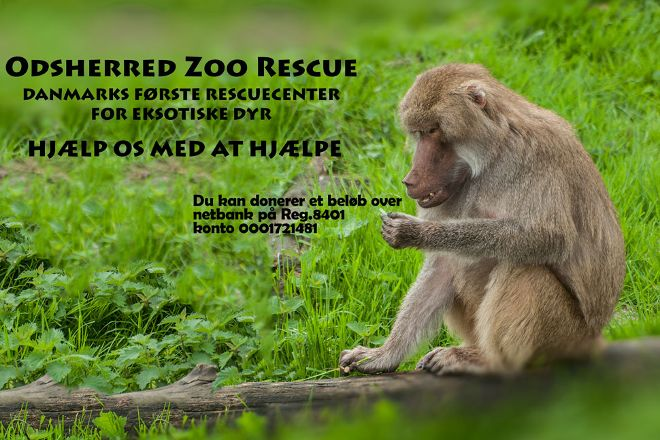 Odsherred Zoo Rescue, Asnaes, Denmark