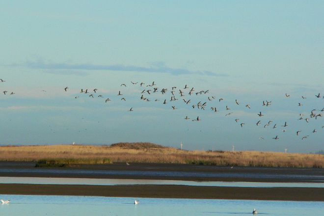 Wadden Sea National Park and World Heritage Site, Roemoe, Denmark