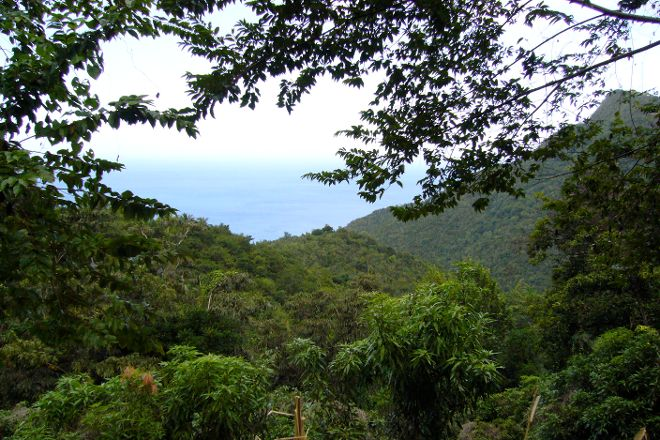 Syndicate Trail, Northern Forest Reserve, Dominica