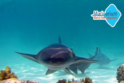 Marinarium Excursions Snorkeling Cruise, Punta Cana, Dominican Republic