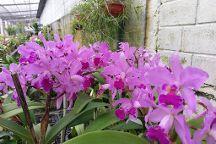Ecuagenera - Ecuadorian Orchids, Cuenca, Ecuador