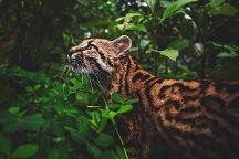 Fundacion Los Monos Selva y Vida, Puyo, Ecuador