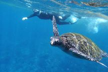 Guiding Galapagos Expeditions