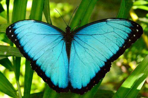 Mariposas de Mindo - Butterfly Garden, Mindo, Ecuador