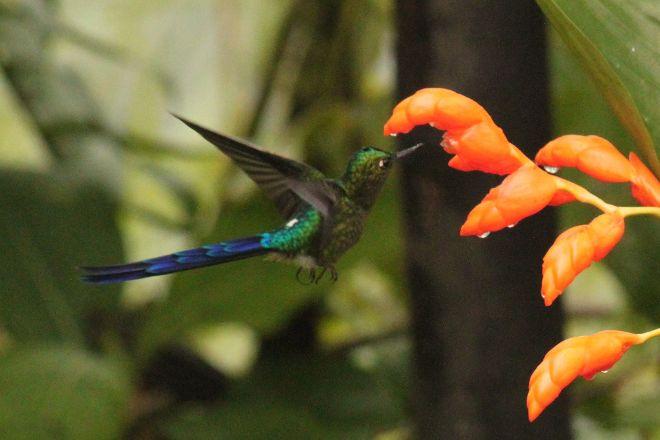 Bird Paradise Tours, Mindo, Ecuador