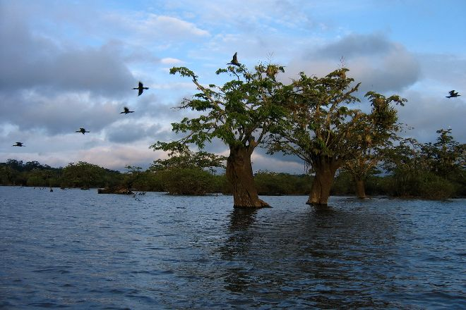 Cuyabeno Reserve, Cuyabeno Wildlife Reserve, Ecuador