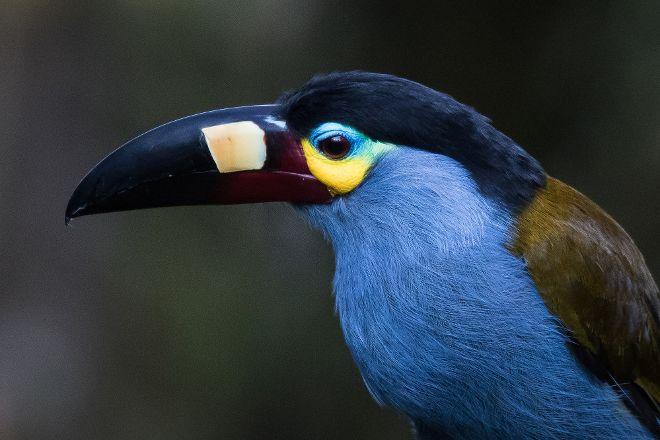 Ecuador Birds Tours, Quito, Ecuador