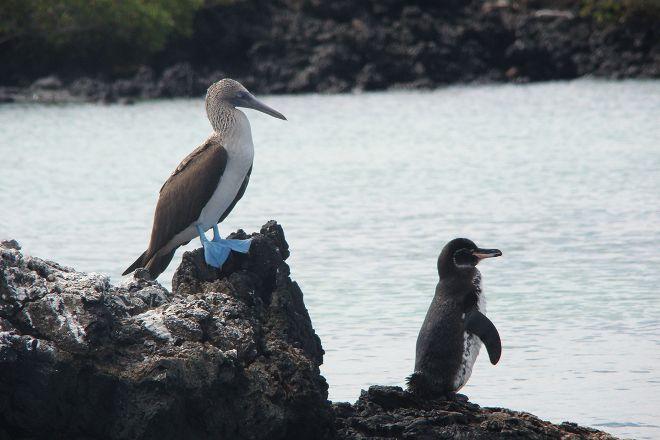 Galapagos Living, Puerto Ayora, Ecuador