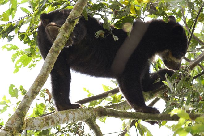 Maquipucuna Reserve, Quito, Ecuador