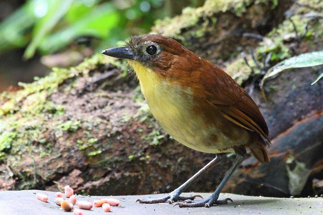 Paz de las Aves Bird Refuge, Mindo, Ecuador