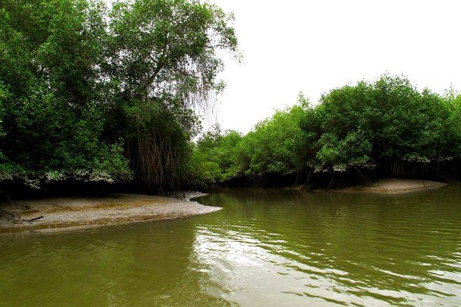 Reserva Ecologica Manglares Churute, Guayaquil, Ecuador