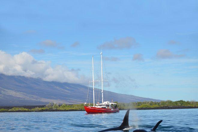 Scuba Galapagos, Puerto Villamil, Ecuador