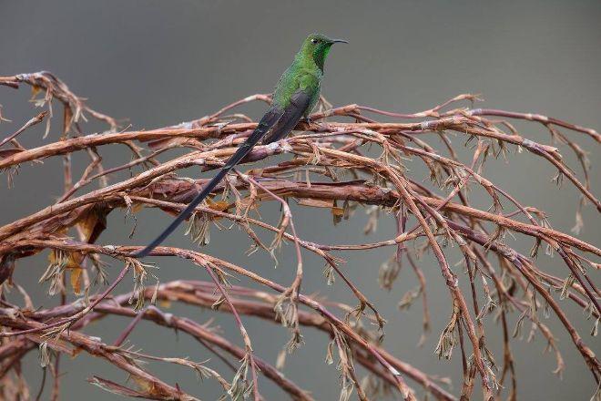Tambo Condor, Pintag, Ecuador