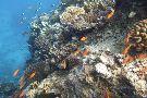 Dolphin House - Sha'ab Samadai Reef