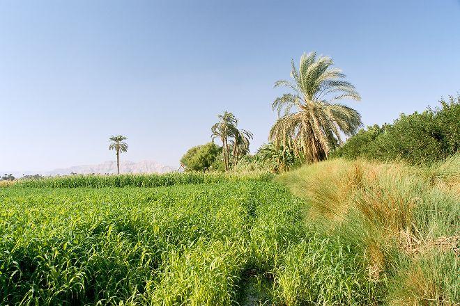 Banana Island (Gezira el-Mozh), Luxor, Egypt